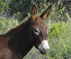 Darn donkey!