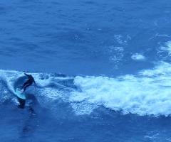 23-SurferDude.jpg