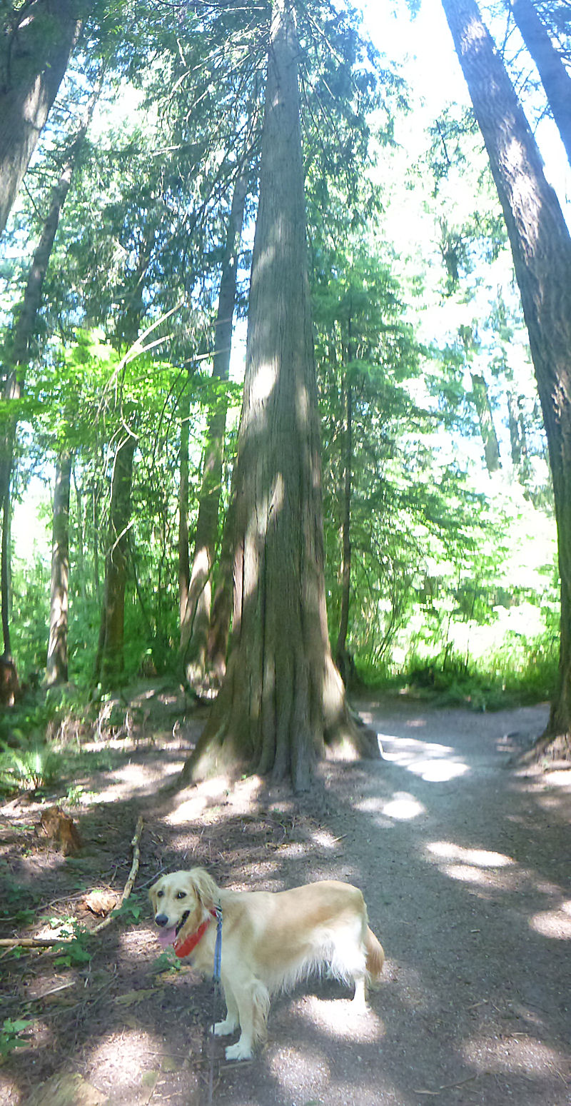 Bailey in Green Timbers