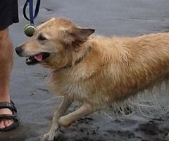 Bailey at Fraser River Park