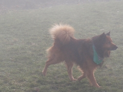 Max in the fog