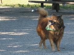Max in Dogwod