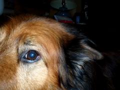 Eye of Max