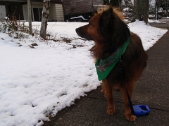 Max in the snow