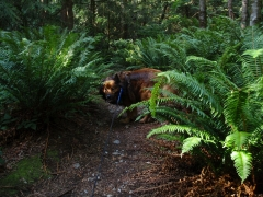 Max in the ferns