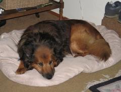 Max, September 2008
