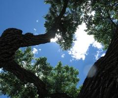 Tree outside Georgia O'Keefe Learning Center