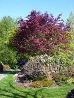 Blooms in Hawthorne Park