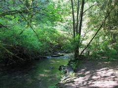 Serpentine River, Tynehead Park