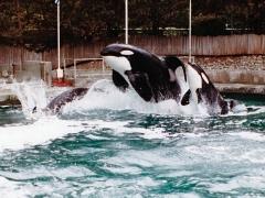 van_aqur_whales.jpg